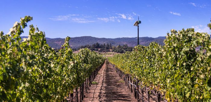 Soil Moisture monitoring in vineyard